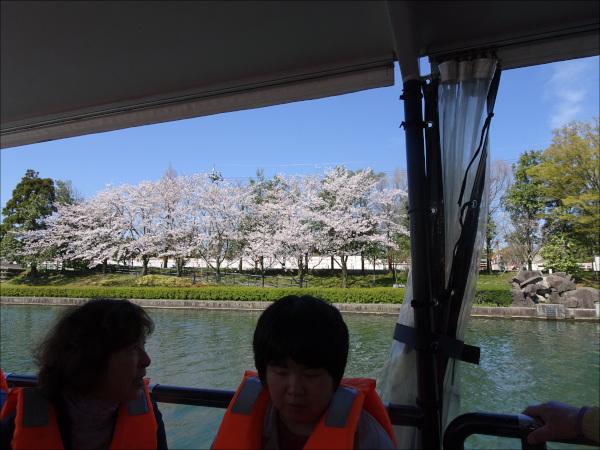 船の窓越の桜